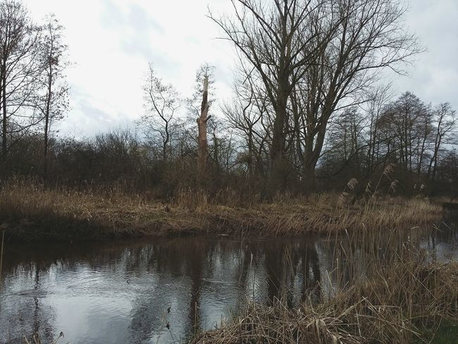 Winter Landscape I. · Rotenburg Rotenburg An Der Wümme Germany Landscapes Nature Trees Water Reflections Tristesse Grayness Gray Sky Clouds And Sky From The Archives