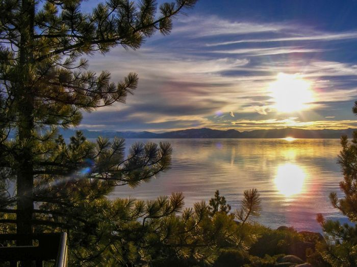 Lake Tahoe California Laketahoe Tree Sky Water Plant Tranquility Cloud - Sky Beauty In Nature Scenics - Nature Tranquil Scene Reflection No People Growth Sunset Sunlight Nature Non-urban Scene Idyllic Outdoors