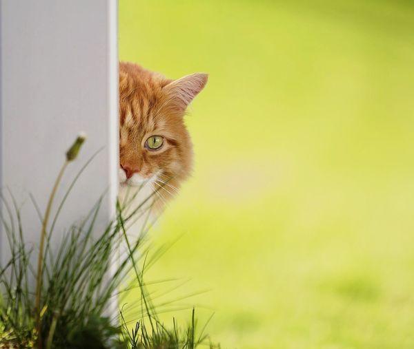 Portrait of cat behind pole