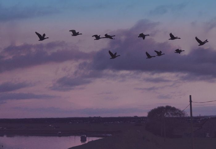 Flying West v2 Flying Dramatic Sky Flock Of Birds Gaggle Of Geese Atmosphere Tranquil Scene