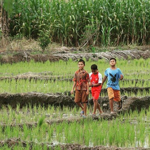 Apa yang kita bikin hari ini menentukan masa depan anak cucu kita... Petani Pemudatani Anakpetani Peasant farmer foodsovereignty kedaulatanpangan sawah indonesiaharussayangpetani instadaily instagood