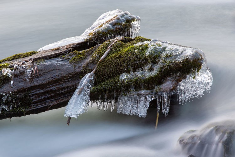 Winter Frozen River Ice Stream Moss Nature Cold Temperature