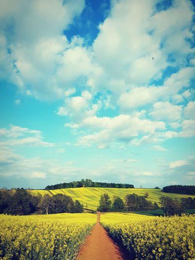 Landscape near Banbury, United Kingdom. Banbury Landscape Nature Green Fieldscape Fields