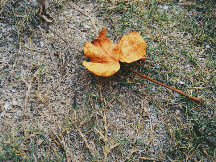 fallen leaf!