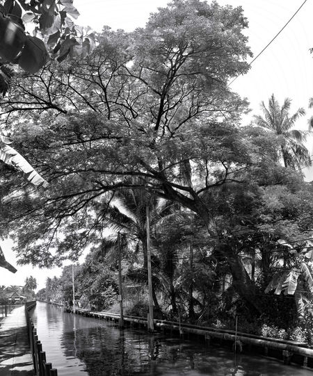EyeEm Best Shots EyeEmNewHere EyeEm Selects Eyeemphotography EyeEm Gallery Canal Walks Canal Black & White Blackandwhite Photography Black And White Tree Water Branch Sky