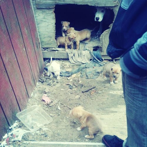 Puppiess