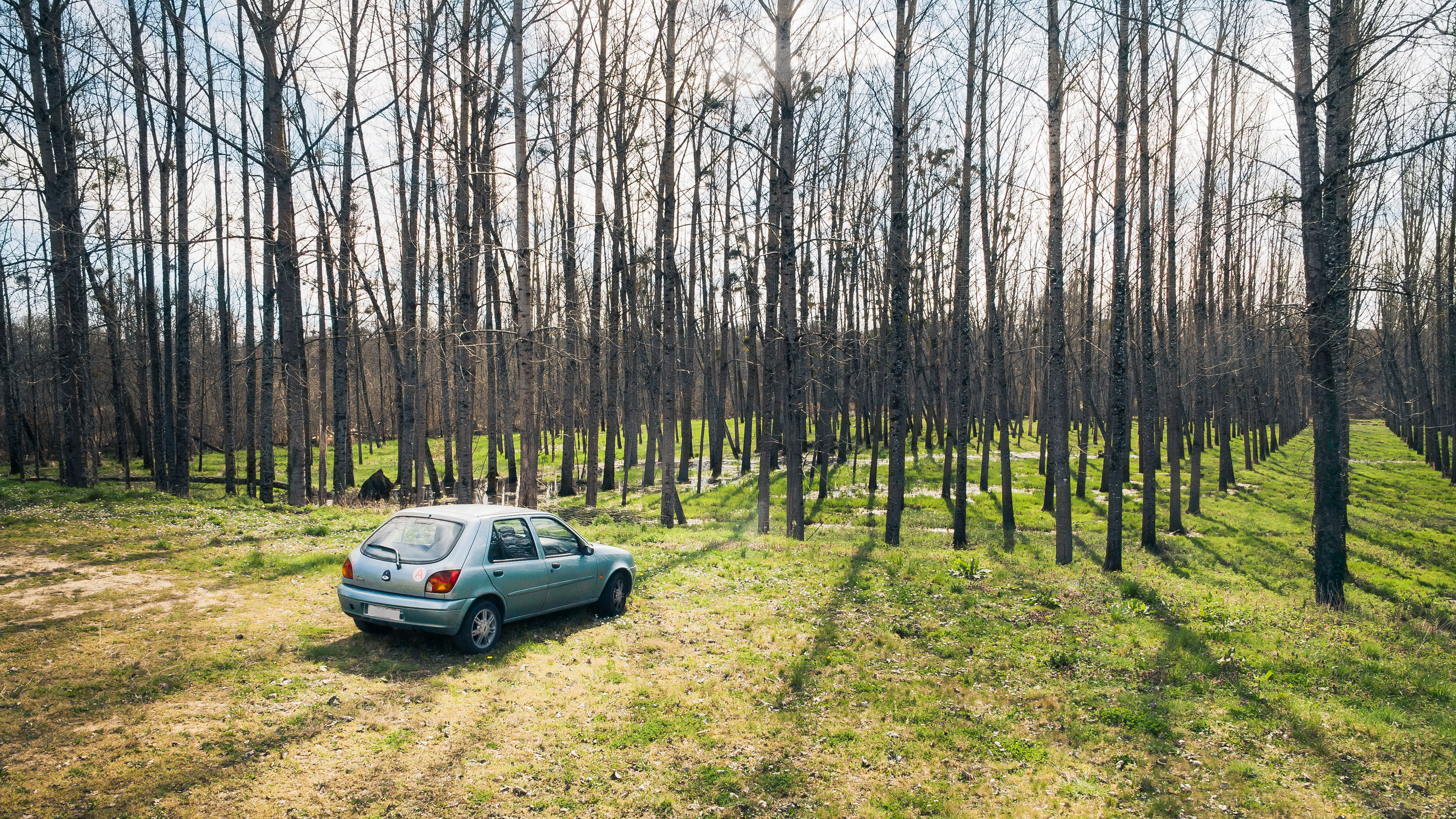 tree, nature, transportation, land vehicle, sunlight, no people, outdoors, forest, tranquility, growth, day, beauty in nature, sky, scenics