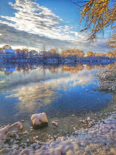 morning #eye4photography # Photooftheday Tree Lake Beauty In Nature Shades Of Winter
