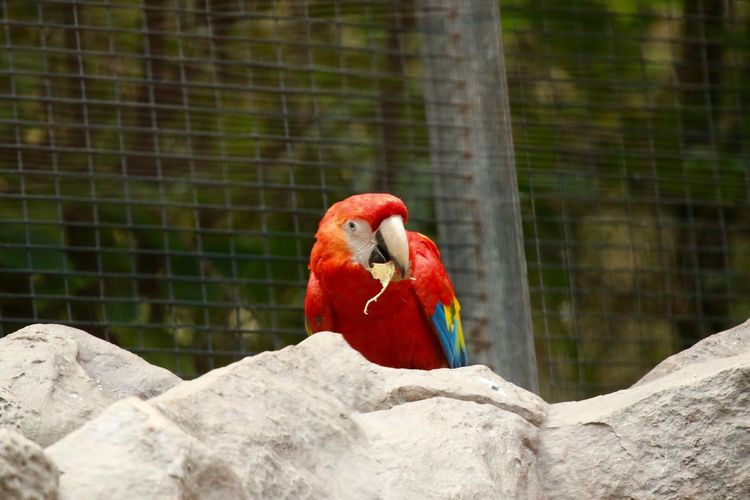 Animal Themes Animals In Captivity Animals In The Wild Beak Bird Cage Close-up Day Focus On Foreground Multi Colored One Animal Papagei Papageien Parrot Perching Vogel Vogels Wildlife