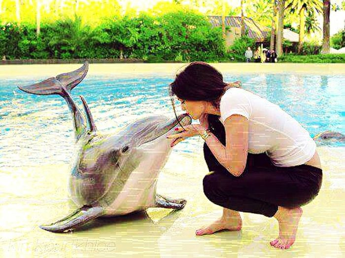So cute dolphins Dolphines