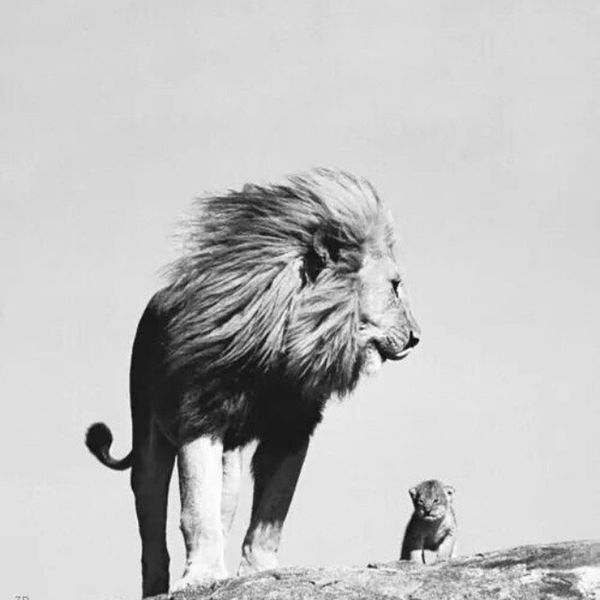 A lion doesn't concern himself with the opinion of a sheep. Qotd Tumblr Lions Determination Inspirational Positive
