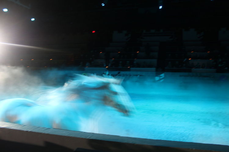 beauty rushing by Abstract Blue Faster Glowing Illuminated Lifestyles Motion Multi Colored Night Running Horse Water White Horse Whizzing By