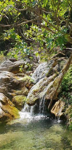 Stream Calm Moss
