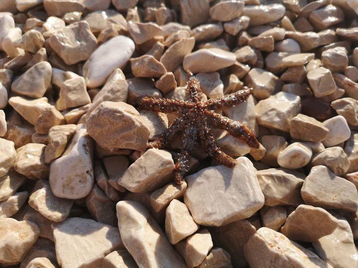 Starfish  EyeEm