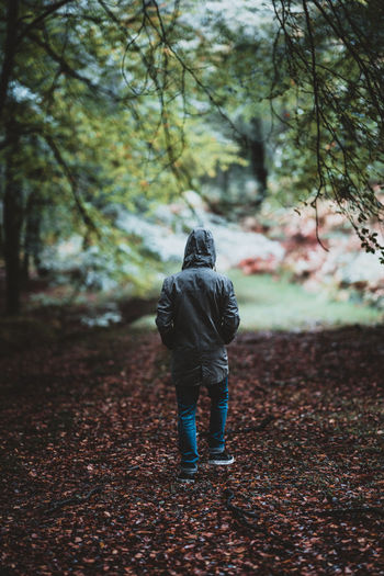 Man walking along a forest track Full Length One Person Tree Rear View Real People Autumn Nature Lifestyles Day Leisure Activity Men Land Plant Clothing Walking Leaf Outdoors Hood Casual Clothing Warm Clothing Hood - Clothing Change