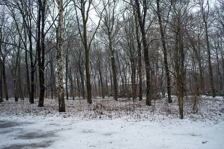 Beauty In Nature Berlin City City Life Cold Temperature Day Europe Forest Landscape Nature No People Outdoors Snow Snow ❄ Snowing Strees Streetphotography Tree Tree Trees Winter Winter