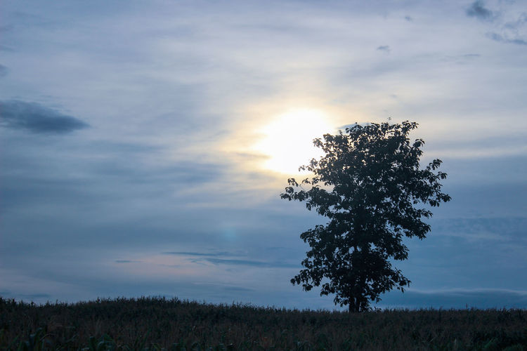 Tree on field against sky at sunset