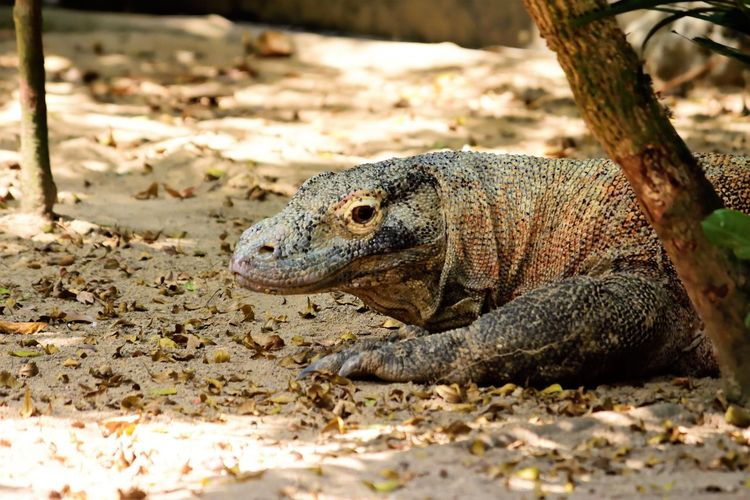 Wildlife and forestry Animal Animal Head  Animal Scale Animal Themes Animal Wildlife Animals In The Wild Close-up Day Field Focus On Foreground Land Lizard Looking Nature No People One Animal Reptile Selective Focus Side View Sunlight Tree Vertebrate