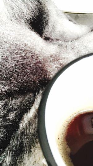 Coffee Coffee Time Blanket Fake Fur Break Leisure Time Caffeine Cozy Home Interior