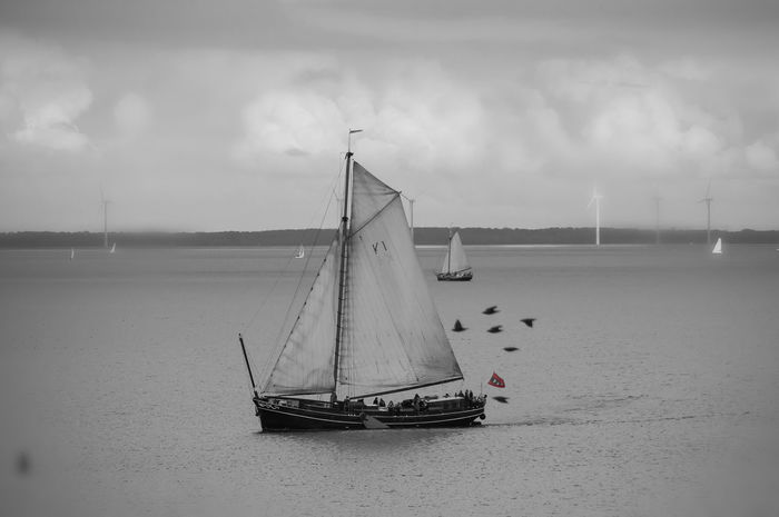Sailing Sailboat Going Sailing Ijsselmeer Lake Water Boats Pidgeons Blackandwhite Black And White