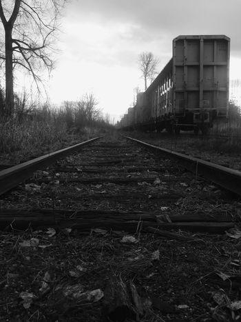 Railroad Track No People Rail Transportation Outdoors Railroad Track Trainphotography Enumclaw Winter Treethugger Transportation