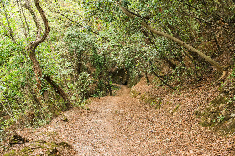 In the Italian forest, La Batteria di Punta Chiappa Autumn Dry Leaves Growth Hiking Path Portofino Natural Regional Park Tranquility Adventure Beauty In Nature Day Deciduous Forest Forest Leaves Mountains Narrow Path Outdoors Pathway Scenics Tourism Way Forward