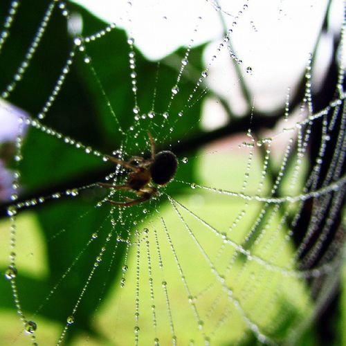 Spiderweb Spider Animals Animales Araña Arácnido Bio Naturelovers Nature_shooters Nature Photonature  Gotas Dew Green Pti Unila Nature_perfection Nature2000 Perfect Perfection