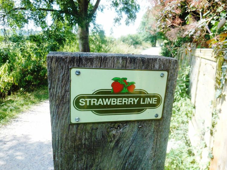Somerset Strawberry Line Old Railway Line Countryside