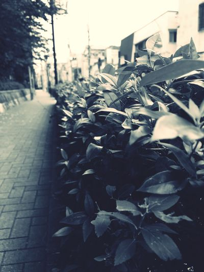Tokyo Tokyo,Japan Plant Roadside Early Summer June Urban Photography Houses Artitecture Viewofthecity Morning Cloudy Early Morning 早朝の風景 東京 初夏 道路脇 整列美 整列 なごみ