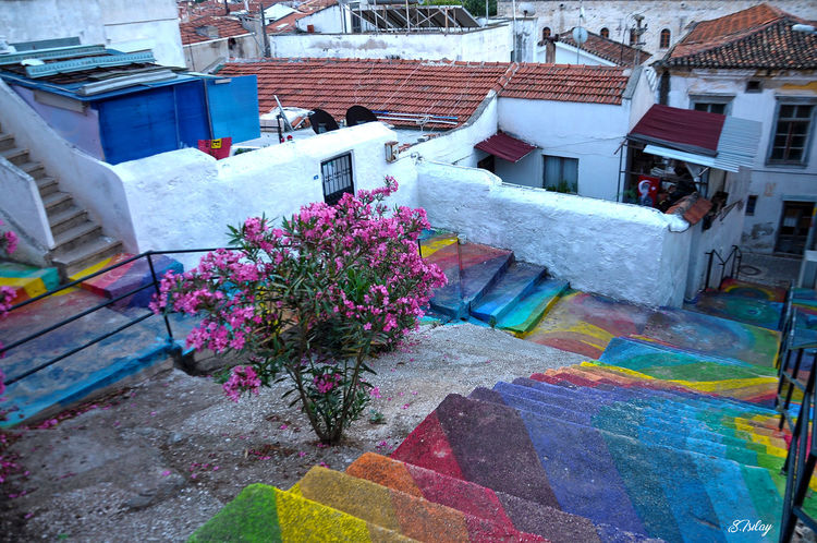 Steps Flowering Plant Old Hause colour of life Color Stp Willage House Built Structure Outdoors