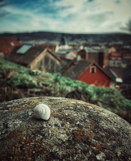 Snail house and a landscape behind No People Close-up Outdoors Sky Nature Day Animal Themes Gastropod Landscape_Collection Landschaft Landscape Landscapes View View From Above Views Outside Photography Peisage Snailshell Shell Shells Outside Cut And Paste The Great Outdoors - 2017 EyeEm Awards