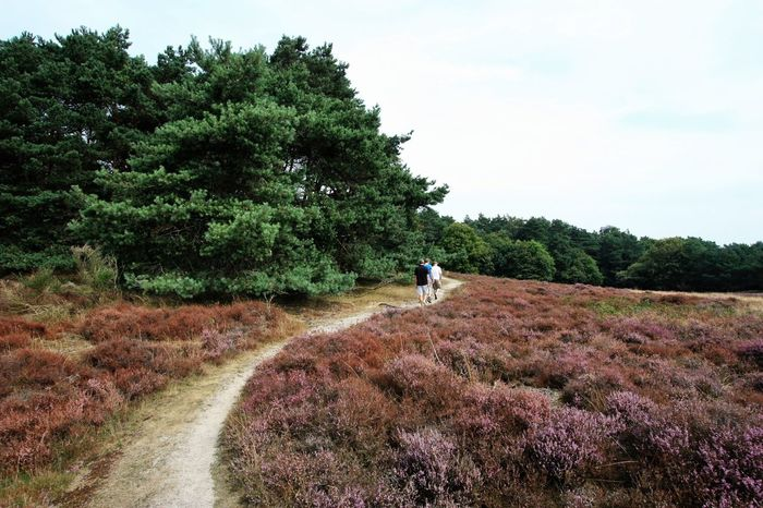 Heather Moor  With The Boys