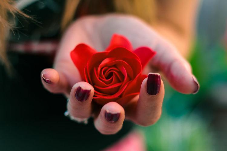 Handful of rose
