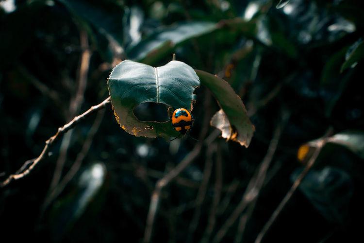 Close-up of a ladybug