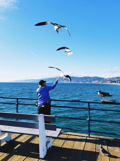 Be. Ready. Sea Bird Flying Water One Person Sky Animal Themes Animal Wildlife Beach Outdoors Rear View Full Length One Animal People Animals In The Wild One Man Only Day Horizon Over Water Standing Adult