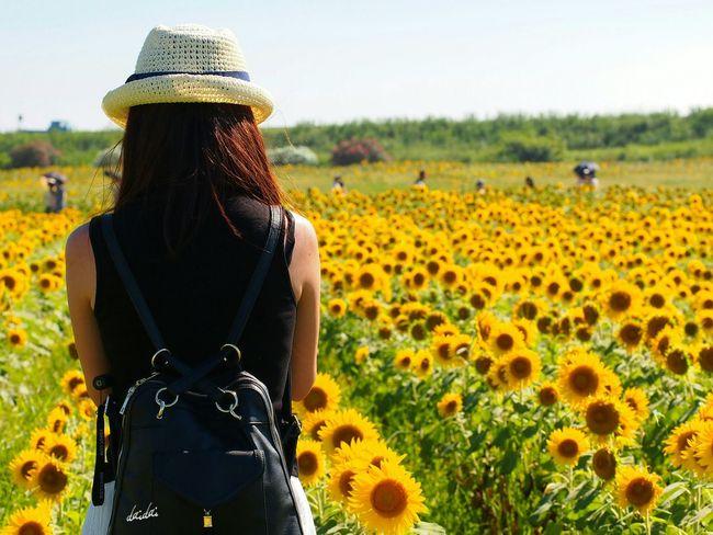 リュック背負ってたら不意に後ろから抱き締められないじゃないか! E-PL3 Flower Sunflower 向日葵 Girl 後ろ姿 柳川ひまわり園