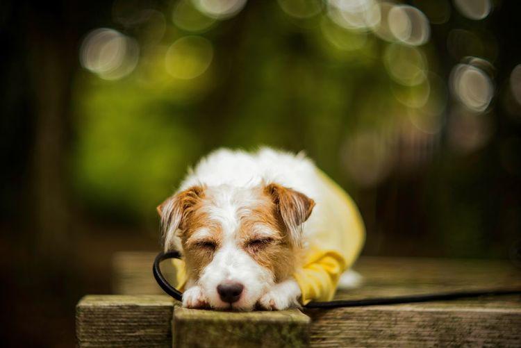 Close-Up Of Dog On Wood