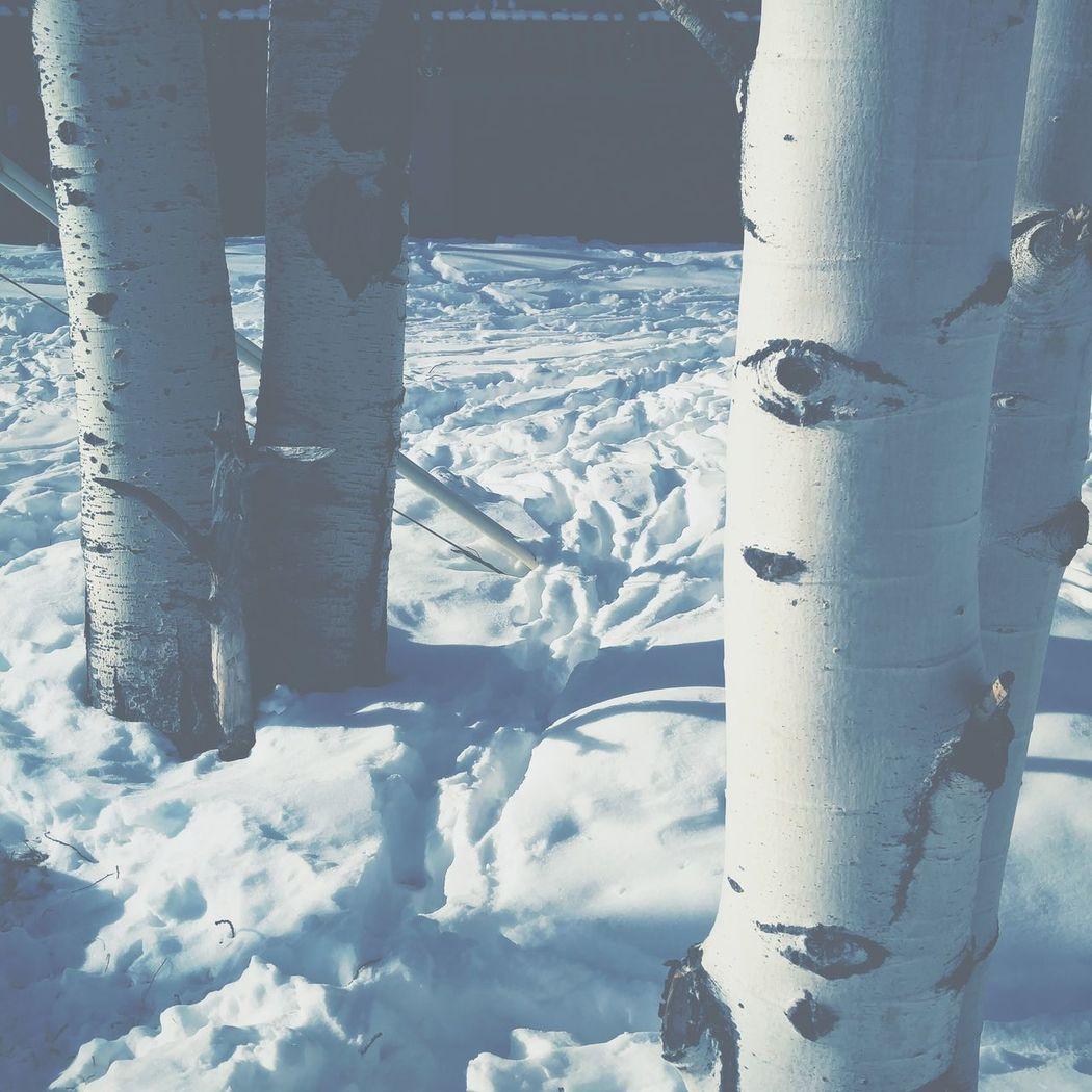 Where's your aspen? Colorado Trees Aspen Snow South Fork Cabin 8200 Ski Trip Río Grande National Forest Winter Del Norte