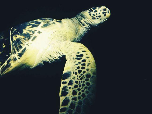 Turtle Aquarium London Schooltrip
