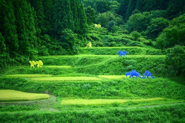 棚田。 Plant Green Color Growth Field Land Real People Nature Beauty In Nature Day Landscape Tree Agriculture Farm Rural Scene Working People Environment