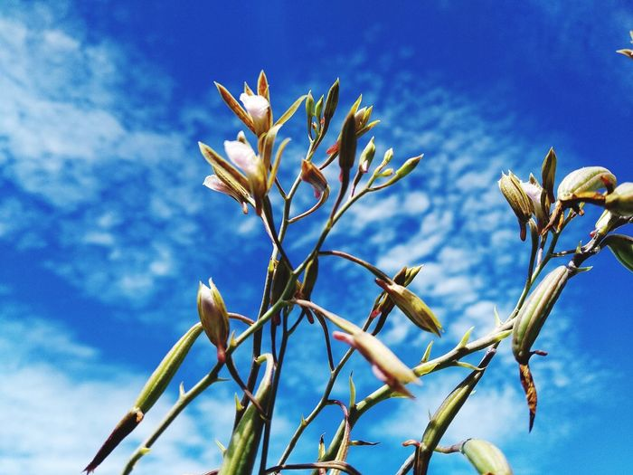 Close-up of flowering plant against blue sky