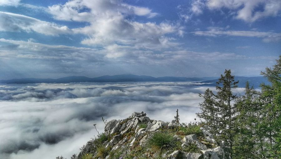 Horizon Over Clouds Beauty In Nature Hiking Tree Mountain Forest Pinaceae Sky Landscape Cloud - Sky