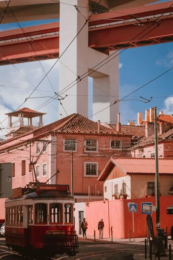 pink portugese