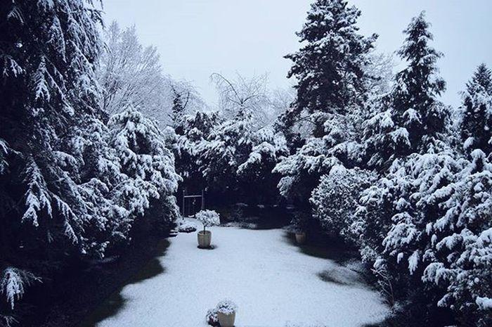 Всю зиму без снега, и тут такое... Март, я от тебя не ожидала Schnee Snow Frühling Spring Frühling Springingermany Frühlingindeutschland Stockum Düsseldorf Dusseldorf_de Ddorfcity Ddorf Germany Deutschland Travel Travel_2_germany Europe