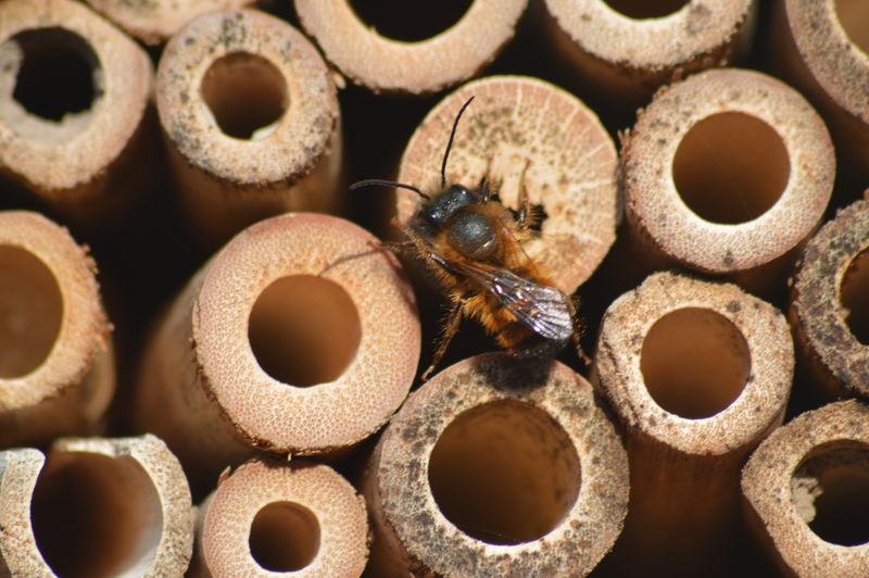 Nature Macro Wood Bee 🐝 Full Frame Arrangement Close-up