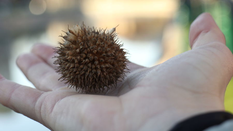 Close-up of person holding nut