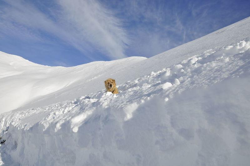 Allgäu Oberstdorf Oberstdorf & Umgebung Oberstdorf Allgäu Nebelhorn snow 😀 My Dog Matze