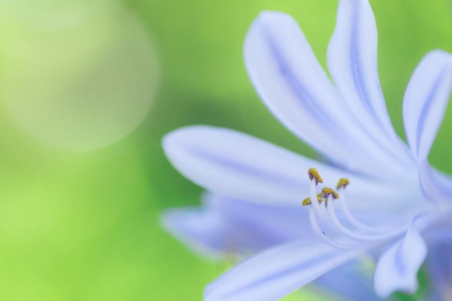 暑中見舞い申し上げます Flowerporn Flowers Macro EyeEm Nature Lover