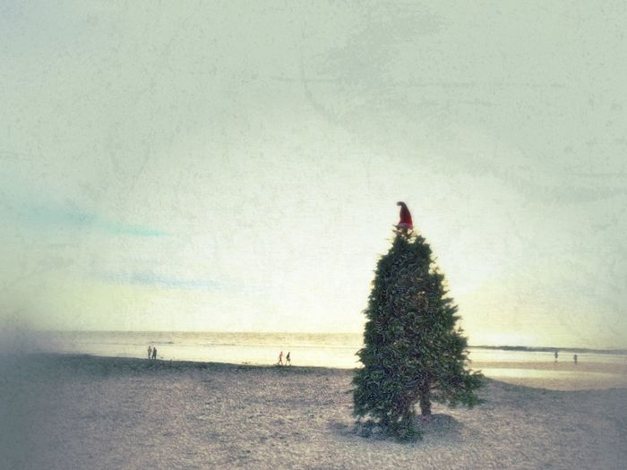 IPhoneography IPS2015Xmas Painterly Beach Christmas Tree