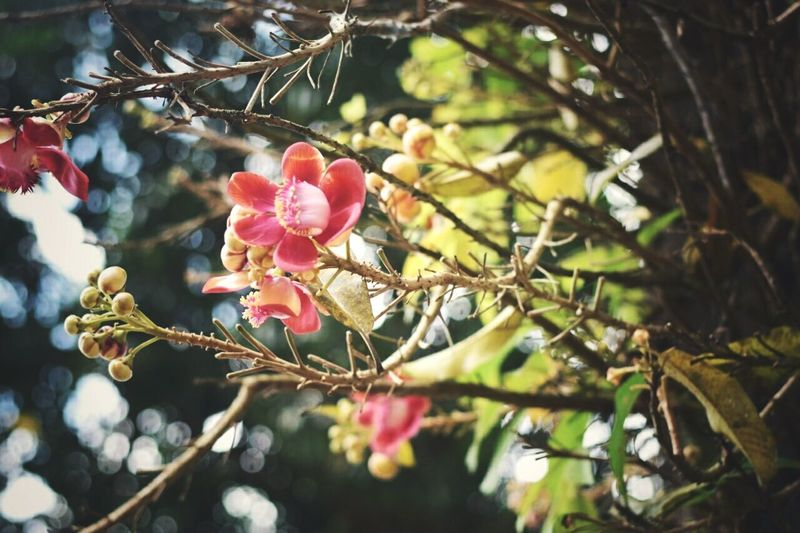 The beauty with thorns! Beauty In Nature Freshness Fragility Flowerporn Thorns🌹 Chittagong Bangladesh Millennial Pink EyeEmNewHere The Great Outdoors - 2017 EyeEm Awards Live For The Story EyeEm Selects Breathing Space